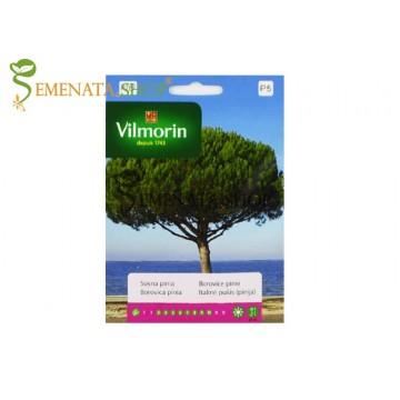 Семена на Пиния (Pinus Pinea)