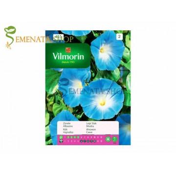 Семена на Ипомея синя (грамофонче, телефонче) - Ipomea purpurea от Vilmorin