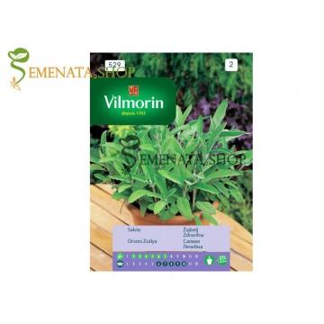 Семена на Салвия - Градински чай