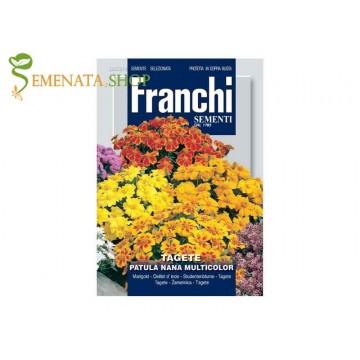 Семена на Тагетес нисък микс от Франчи