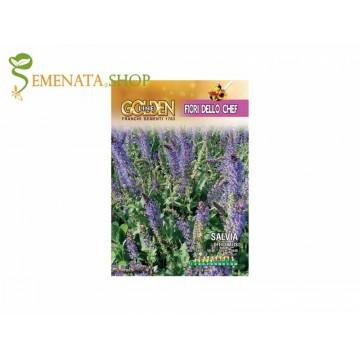 Семена на Салвия (Градински чай) ядливи цветове