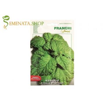 Босилек с големи листа като маруля отгледайте от семена на Franchi