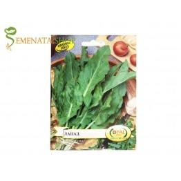 Качествени семена на Лапад  - Rumex patientia или още Лупош