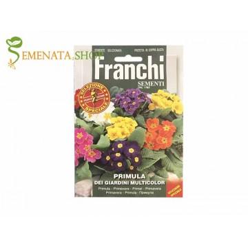 Семена на градинска Иглика микс - Primula acaulis