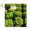 Професионални семена за зелена салата дъбов лист сорт PLEASANCE на Бейо