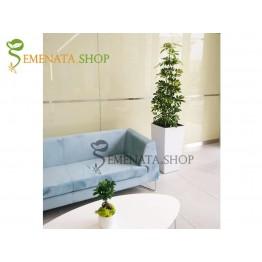 Луксозна бяла саксия за озеленяване на офиси Луйджи - перфектна за палми и драцена