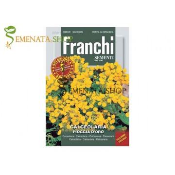 Семена на Калцеолария ( Calceolaria) - Пантофка