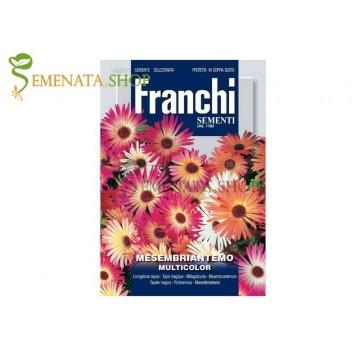 Семена на Доротеантус ( Месембриантемум ,Обедно цвете, Мезембриантемум ) - Dorotheanthus criniflorum