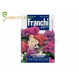 Семена на Шизантус (Schizanthus pinnatus) - обилен цвят за скален кът или бордюр