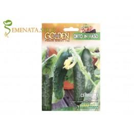 Специална селекция семена на краставици за саксия сорт Маркетмур