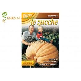 Семена на тиква Атлантически гигант - огромни плодове