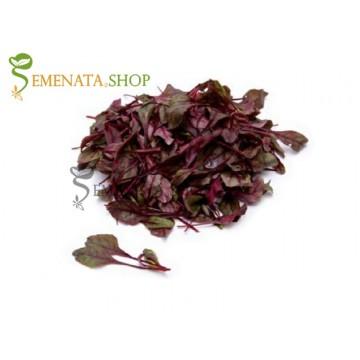 Семена на Червенолистно бейби цвекло Скарлета F1 (Scarletta F1)