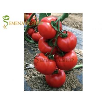 Семена на домати Витара F1 - Vitara F1 Fito