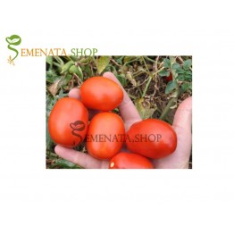 Семена на детерминантни (безколови) домати Керо F1 - Kero F1