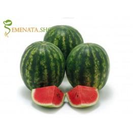 Професионални семена на Диня Дайтона F1 - плодове сладки с дебела кора и размер 12 - 15 кг