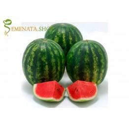 Сортови семена на Диня Кримстар F1 (Krimstar F1) - с високо съдържание на захар