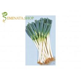 Професионални семена на лук за зелено с дълга бяла част Лонг Уайт Кошигая F1 - за пролетно, лятно и есенно производство