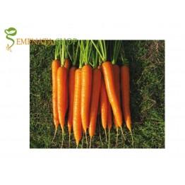 Професионални семена на Моркови Кориган F1 (Korrigan F1)