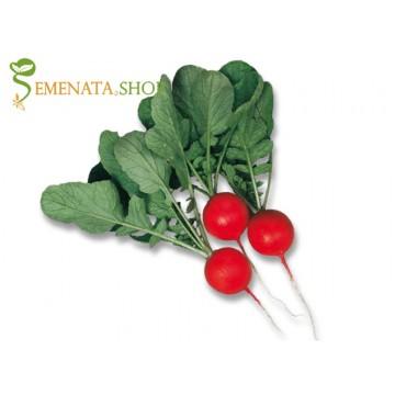 Професионални семена на Репички Чериета F1 - за зимно и ранно пролетно производство в оранжерия