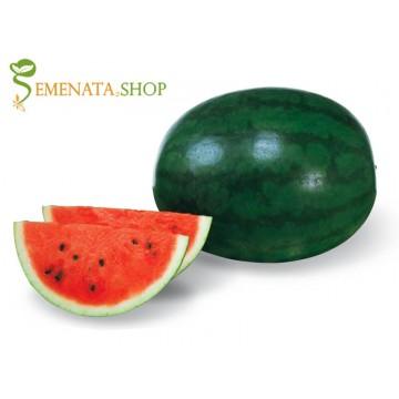 Японски семена на едра диня Шугър Деликата F1 (Sugar delicata F1) с плодове 9-11 кг