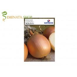 Семена на хибриден лук Колос F1 - сръбски сорт с мощен добив и дълго съхранение