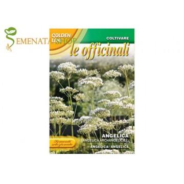 Семена на Лечебна Пищялка - известната билка Ангелика (Angelica Archangelica)