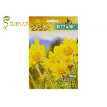 Семена на Арника планинска (Arnica montana) - красота и наситен приятен аромат