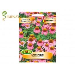 Качествени семена на Ехинацея - Echinacea purpurea - Супер сухоустойчиви цветя