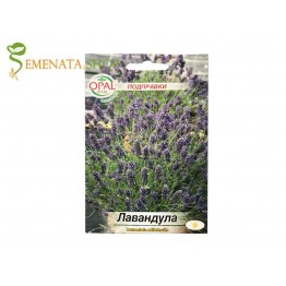 Семена на Лавандула - Lavandula officinalis