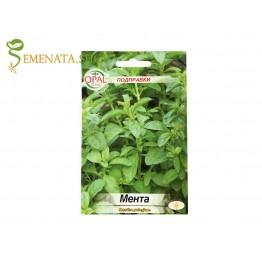 Семена от ароматна Мента (Mentha pulegium)