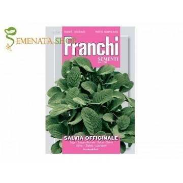 Семена на Салвия - Градински чай (Salvia officinalis) билка
