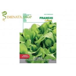 Семена на Цикория листна светлозелена