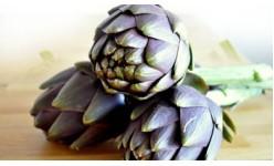 Семена на артишок