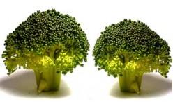 Семена на броколи