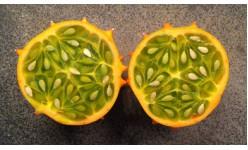 Семена на кивано