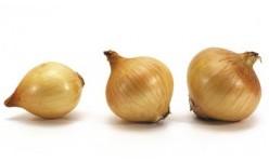 Семена на лук