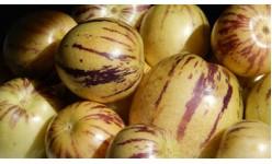 Семена на пепино (пъпешово дърво)