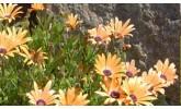 Торове за цветя