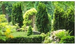 Торове за храсти и дървета