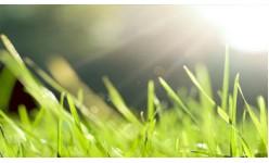 Тревни смески за слънце