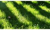 Тревни смески за сянка
