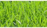 Тревни смески универсални