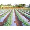 Професионално фолио за мулчиране на домати и краставици сребристо - черно 15 микрона