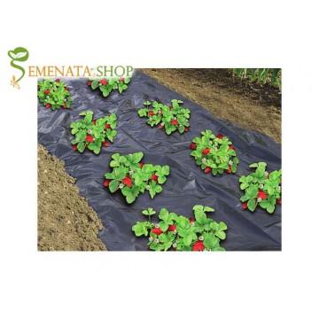 Мулчиращо фолио за ягоди черно с UV защита 1,40/10 м - 40 микрона без Перфорация