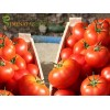 Семена за домати Буран F1 (Buran F1) - Енза Заден