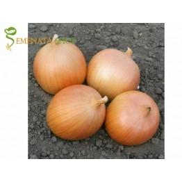 Професионални семена на воден лук Дайтона F1 - сухоустойчив сорт с мощна коренова система