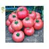 Семена за домати Димероса F1 (Dimerosa F1) - Уникално вкусен професионален розов домат
