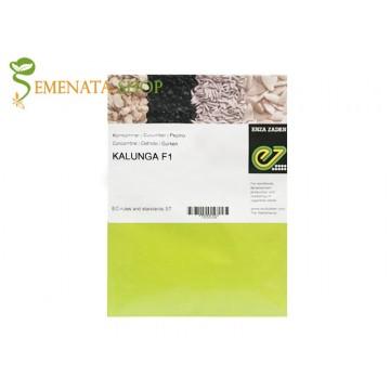 Семена на краставици Калунга F1 (Kalunga F1) - за ранно производство и целогодишно в оранжерия