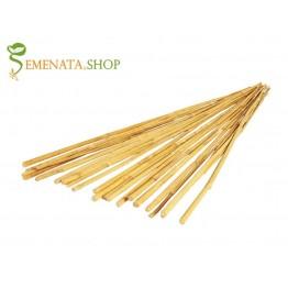 Дълги и здрави бамбукови колци за домати - 244 см (Ф18-20 мм)