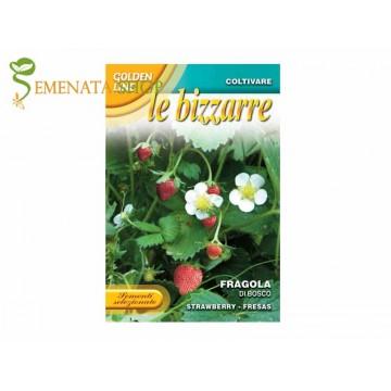 Семена на горски ягоди - изключително ароматен и вкусен сорт